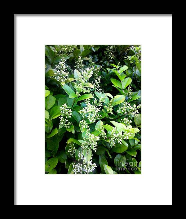 Plant Framed Print featuring the photograph Sublime by Linda Wild