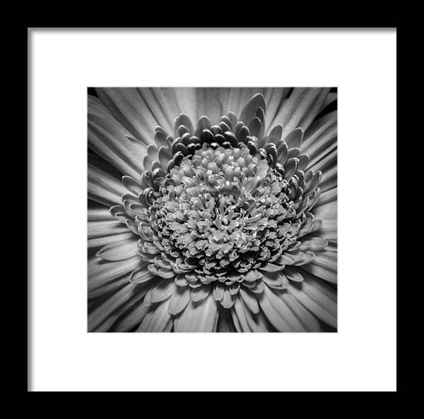 Flower Framed Print featuring the photograph Subtle Complexity In Black And White by Eva Kondzialkiewicz