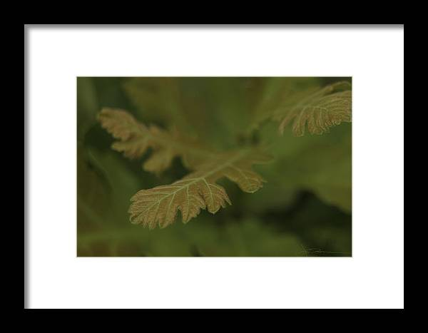 Buns Photo Framed Print featuring the photograph Subtle Green by Jim Bunstock