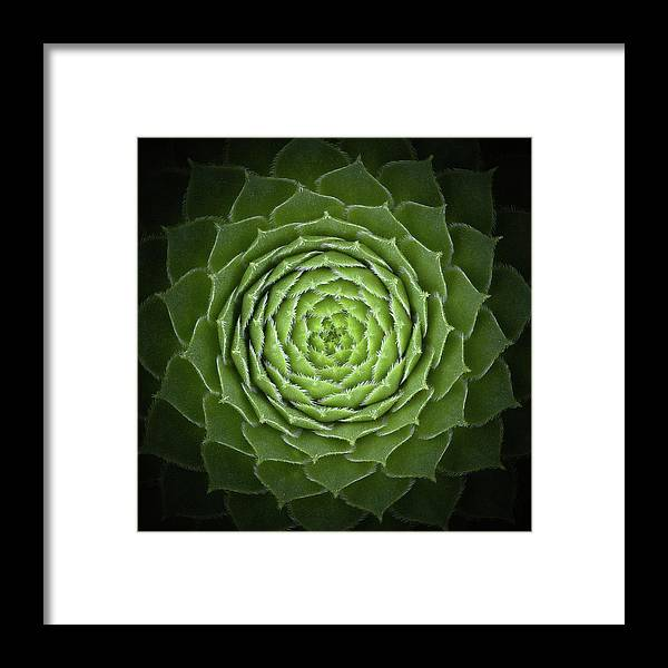 Green Framed Print featuring the photograph Succulent by Victor Mozqueda