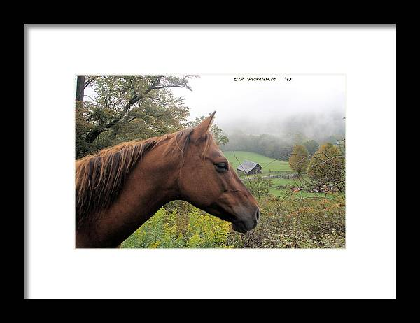 Fairview Farm Framed Print featuring the photograph Sugar watching over her Home by Carolyn Postelwait