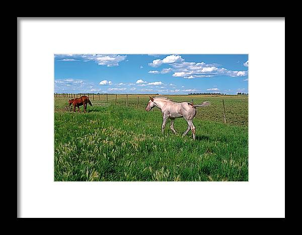 Scenic Framed Print featuring the painting Summer Colt by Terry Reynoldson