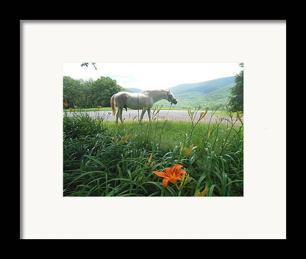 Summer Framed Print featuring the photograph Summer Day Memories With The Paso Fino Stallion by Patricia Keller