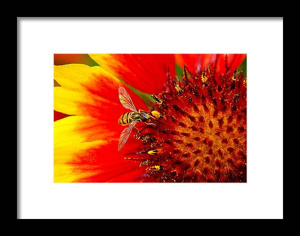 Buzz Framed Print featuring the photograph Summer Day by Frozen in Time Fine Art Photography