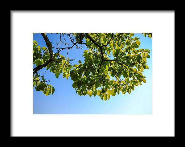 Leaves Framed Print featuring the photograph Summer Sky by Gaurav Singh