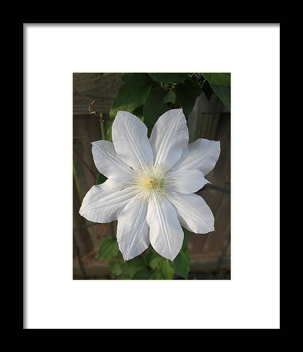 Flower Framed Print featuring the photograph Summer Snowflake by Janie Reid