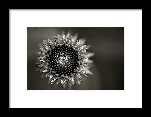 Flower Framed Print featuring the photograph Summer's Promise by Kristi Swift