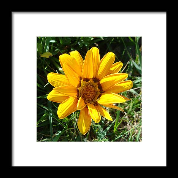 Flower Framed Print featuring the photograph Sun Flower by Nuno Silva