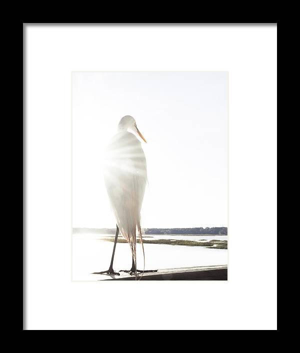 Standing Water Framed Print featuring the photograph Sun Perch by Copyright Dan Smith