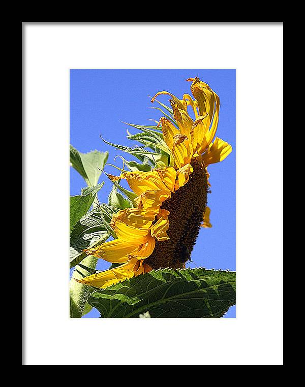 Sun Framed Print featuring the photograph Sun Up by Kerri Huven