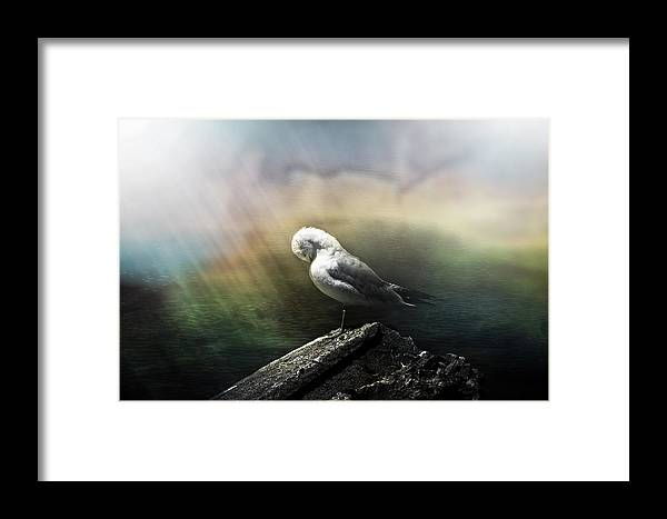 Distress Flare Framed Print featuring the photograph Sunbeam On Seagull by Sylvie Corriveau