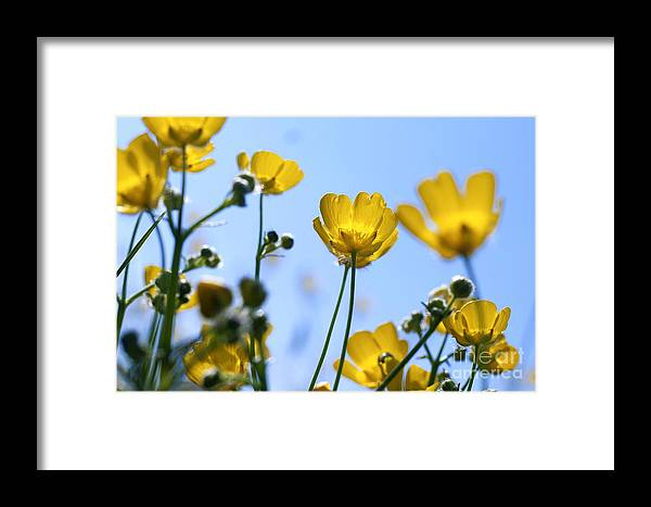 Flowers Framed Print featuring the photograph Sunbrella by Alexander Photography