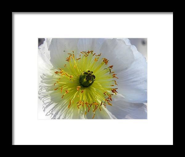 Flower Framed Print featuring the photograph Sunburst by Deb Halloran