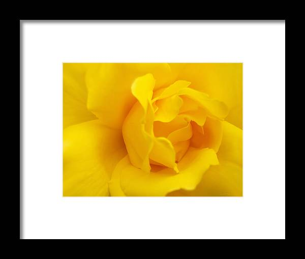 Rose Framed Print featuring the photograph Sunburst Rose Flower by Jennie Marie Schell