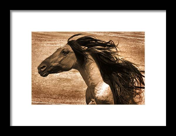 Sundowner Framed Print featuring the photograph Sundowner by Lourie Zipf