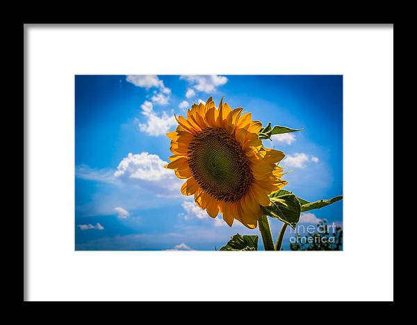 Sunflowers Framed Print featuring the photograph Sunflower 3 by Jim McCain