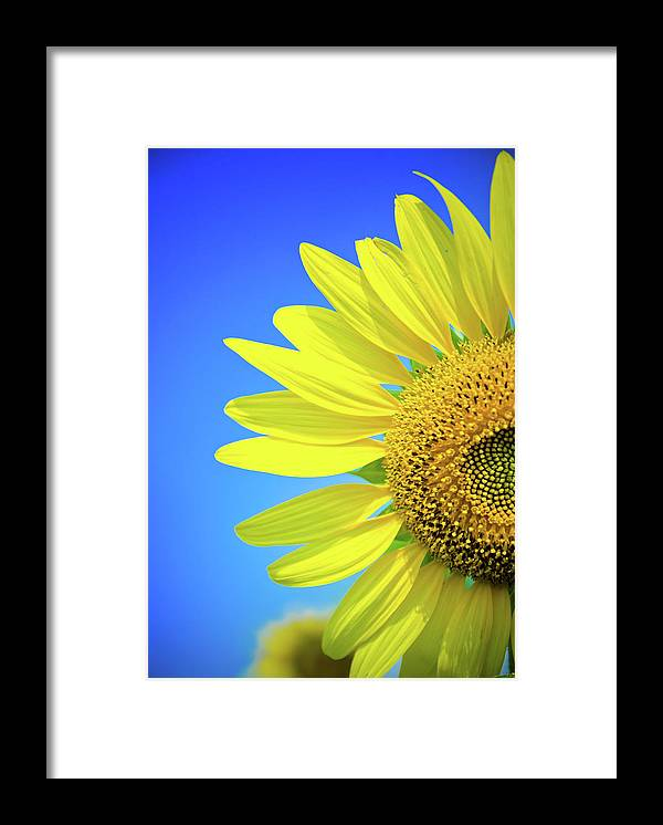 Clear Sky Framed Print featuring the photograph Sunflower Against Blue Sky by N. Umnajwannaphan
