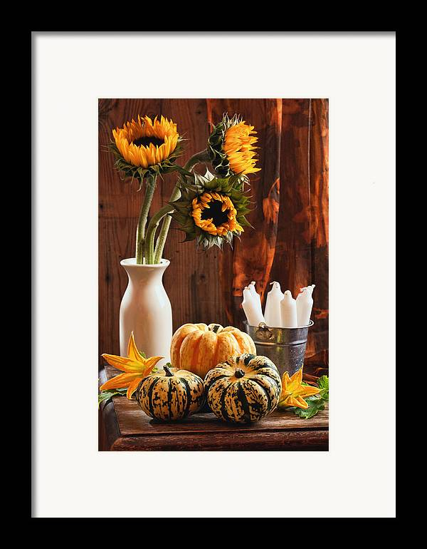 Pumpkin Framed Print featuring the photograph Sunflower And Gourds Still Life by Amanda Elwell