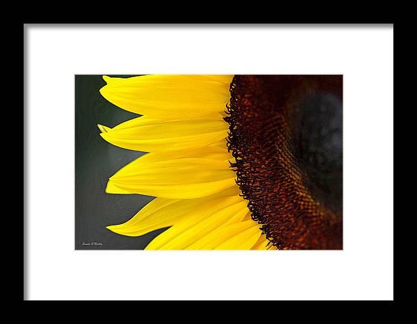 Sunflower Framed Print featuring the photograph Sunflower Beauty by Sandi OReilly