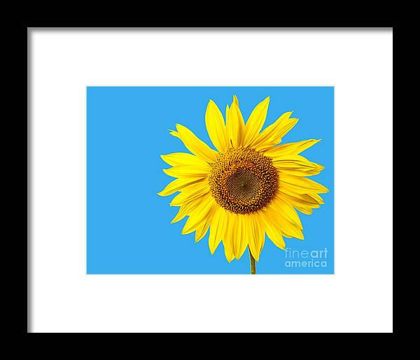 Bloom Framed Print featuring the photograph Sunflower Blue Sky by Edward Fielding