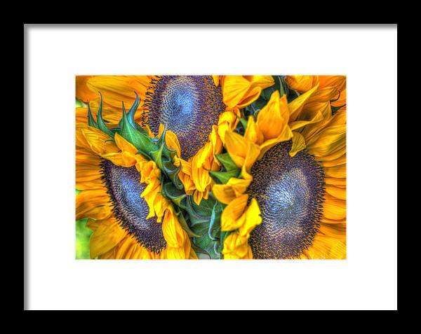 Framed Print featuring the photograph Sunflower Delight by Heidi Smith