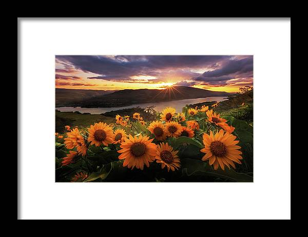 Outdoors Framed Print featuring the photograph Sunflower Field by Jeremy Cram Photography