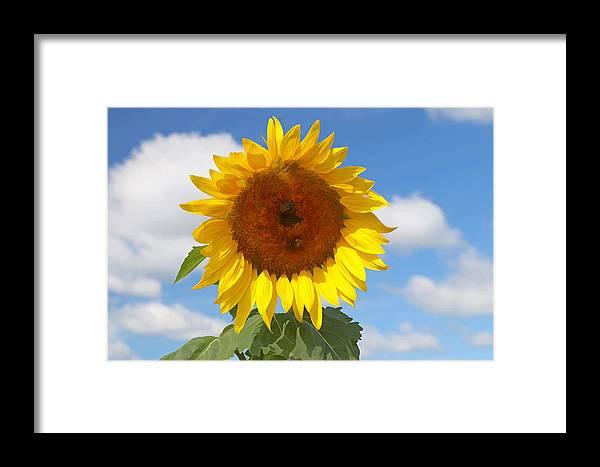 Yellow Framed Print featuring the photograph Sunflower Nirvana 30 by Allen Beatty