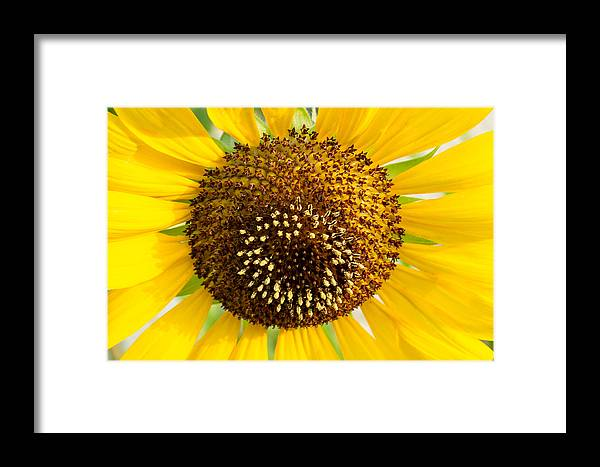 Reproductive Framed Print featuring the photograph Sunflower Reproductive Center by Douglas Barnett