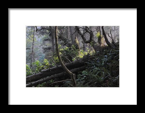 Fern Canyon Framed Print featuring the photograph Sunlight Filtering Through An Old-growth Forest by Scott Lenhart