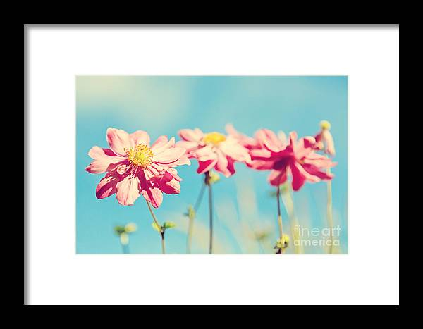 Anemone Framed Print featuring the photograph Sunlit Anemone Flowers With Cross Processed Effect by Natalie Kinnear