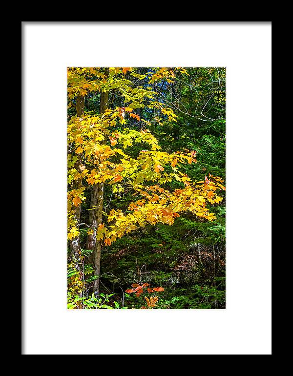 Landscape Framed Print featuring the photograph Sunlit by Steve Harrington