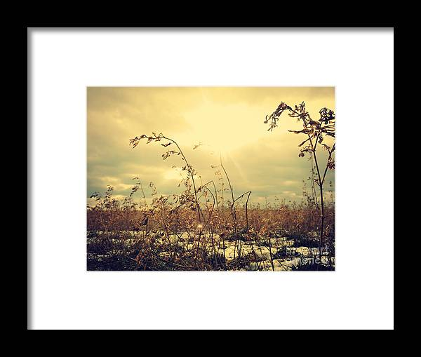 Field Framed Print featuring the photograph Sunny Field by Felix Laliberte