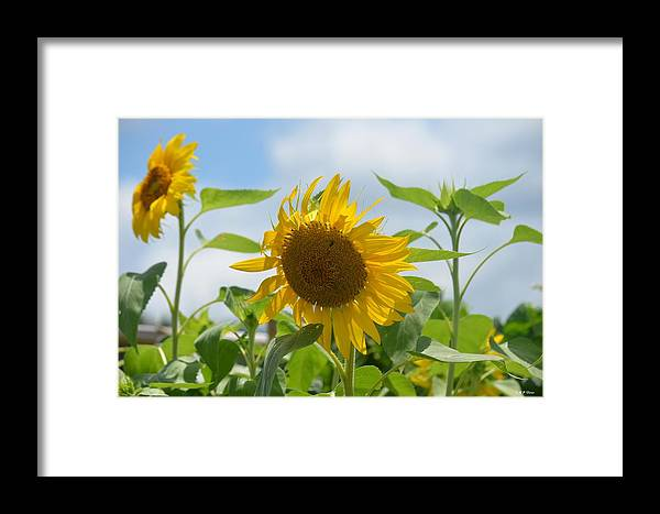 Sunny July 2013 Framed Print featuring the photograph Sunny July 2013 by Maria Urso