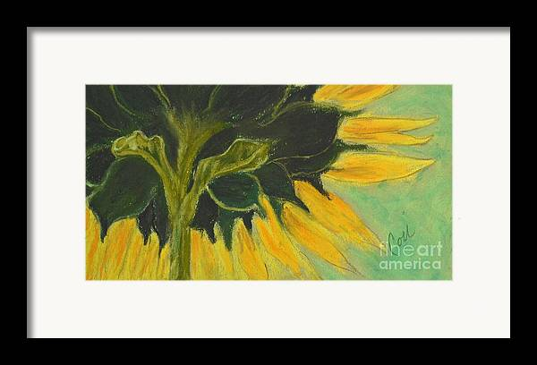 Sunflower Framed Print featuring the drawing Sunny Side Up by Cori Solomon