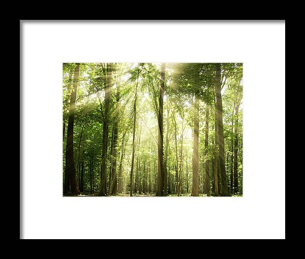 Tranquility Framed Print featuring the photograph Sunrays Through Treetops by Melissa Fague