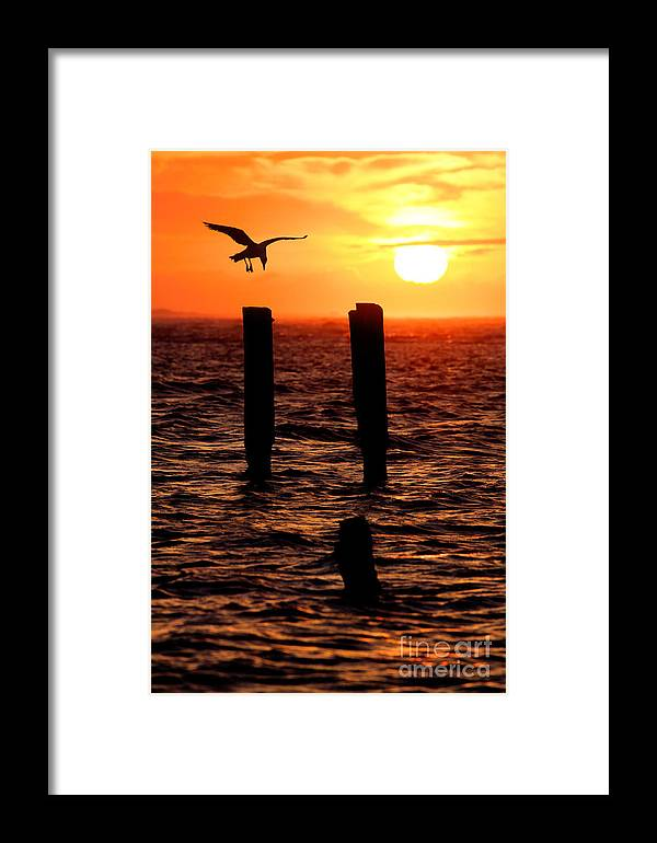 North Carolina Framed Print featuring the painting Sunrise Descent - Outer Banks Ocracoke by Dan Carmichael