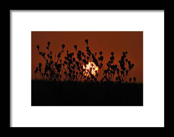 Sunrise Framed Print featuring the photograph Sunrise In South Texas by Daniel Alcocer