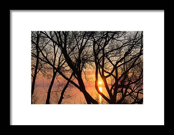 Chaos Framed Print featuring the photograph Sunrise Through The Chaos Of Willow Branches by Georgia Mizuleva