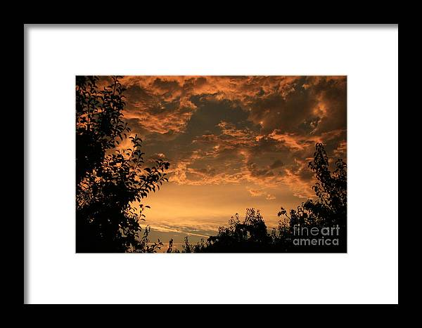 Sunset Framed Print featuring the photograph Sunset In The Orchard by Cari Gesch
