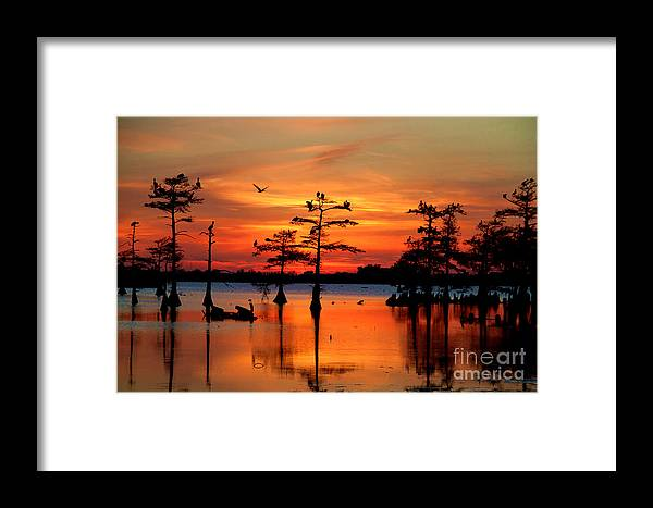 Everglades Framed Print featuring the photograph Sunset On The Bayou by Carey Chen