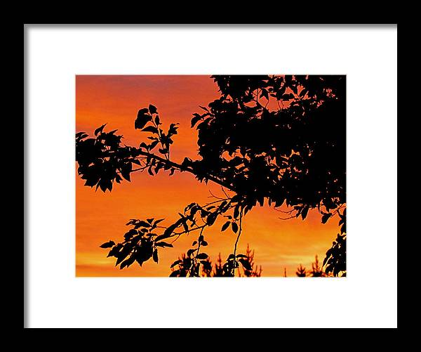 Sunst Framed Print featuring the photograph Sunset Throw the Trees by Joyce Woodhouse