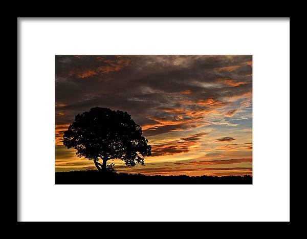 Lion King Framed Print featuring the photograph Sunset Tree by Aaron Greuel