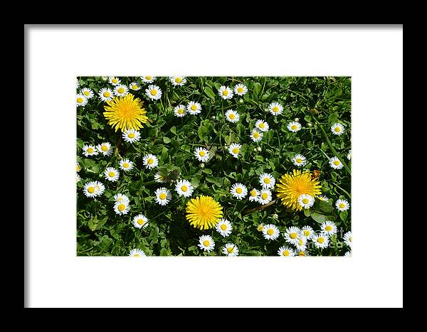 Landscape Framed Print featuring the photograph Sunshine In The Daisies by Jan Noblitt