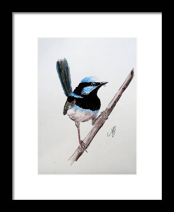 Bird Framed Print featuring the painting Superb Fairy Wren by Anne Gardner