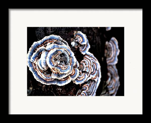 Fungi Framed Print featuring the photograph Surprising II by Carlee Ojeda