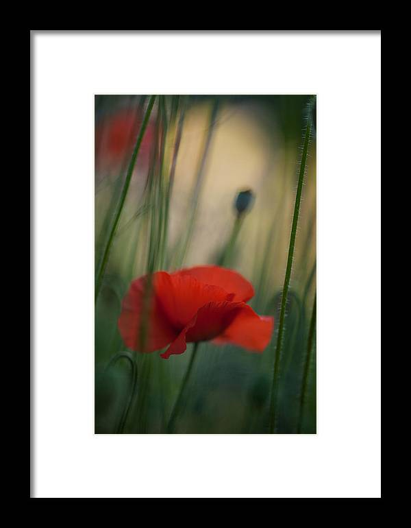 Flower Framed Print featuring the photograph Surrealistic Red by Mike Reid