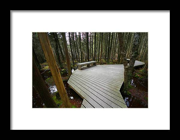 Cape Cod Framed Print featuring the photograph Swamp Bench by David DeCenzo