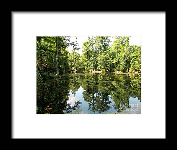 Swamp Framed Print featuring the photograph Swampland Reflection At The Plantation by Christiane Schulze Art And Photography