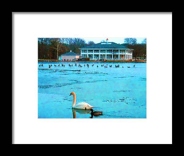 Swan Framed Print featuring the digital art Swan Duck Geese by Joseph Wiegand
