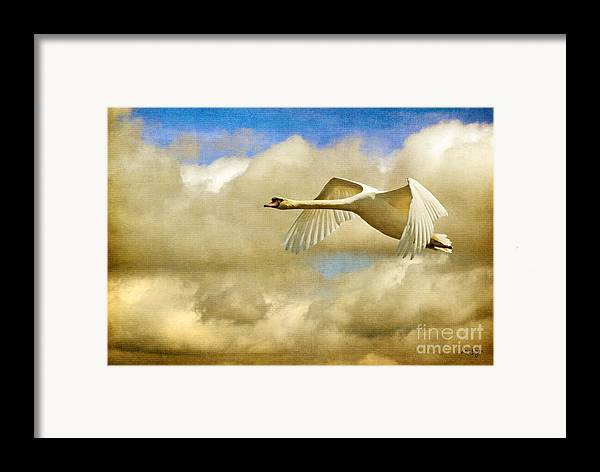 Nature Framed Print featuring the photograph Swan Song by Lois Bryan